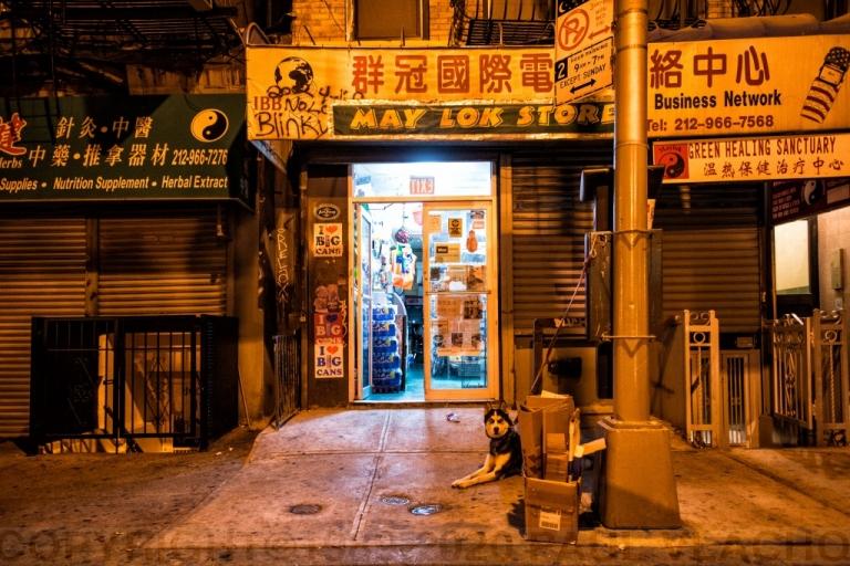 chinatown dog